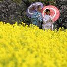 Tokio, repka, svadobný pár