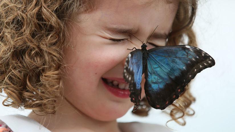 motýľ, dieťa, hmyz,