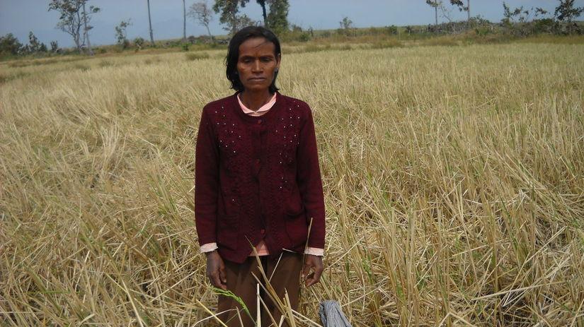 kambodža, cukrová trstina