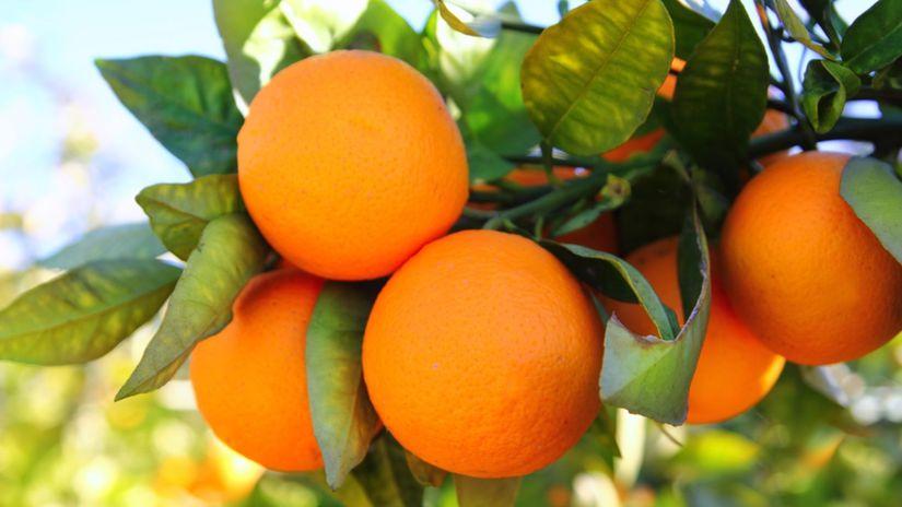pomaranč, ovocie, vitamíny