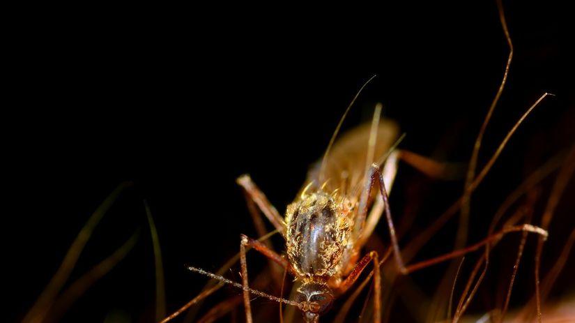 malária, komár, anopheles, moskyt