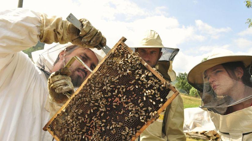 včely, úľ, med