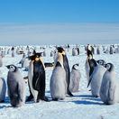tučniaci, tučniak, severný pól, antarktída,