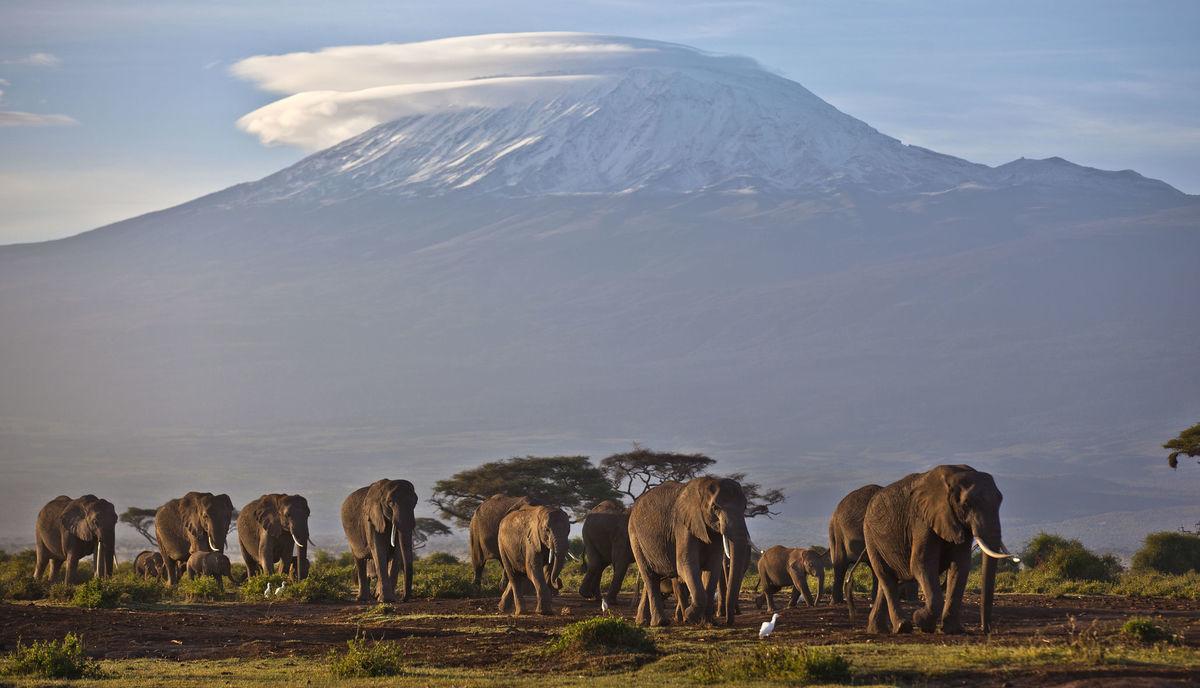 Afrika, slony, Keňa