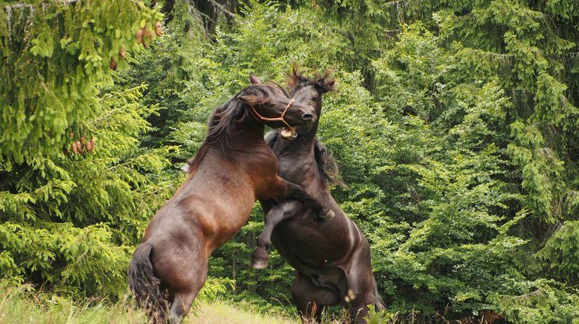huculy, kone, kôň, pastier, norik muránsky