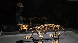 Dinosaurium, Incheba, výstava, dinosauri, dinosaurus,