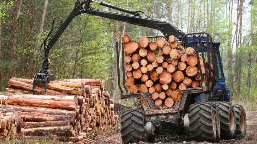 prales, stromy, ťažba, výrub, drevo, kmene