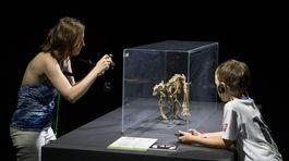 výstava, dinosaury, incheba, Dinosaurium