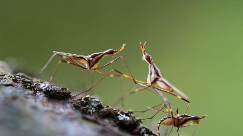 muchy, hmyz