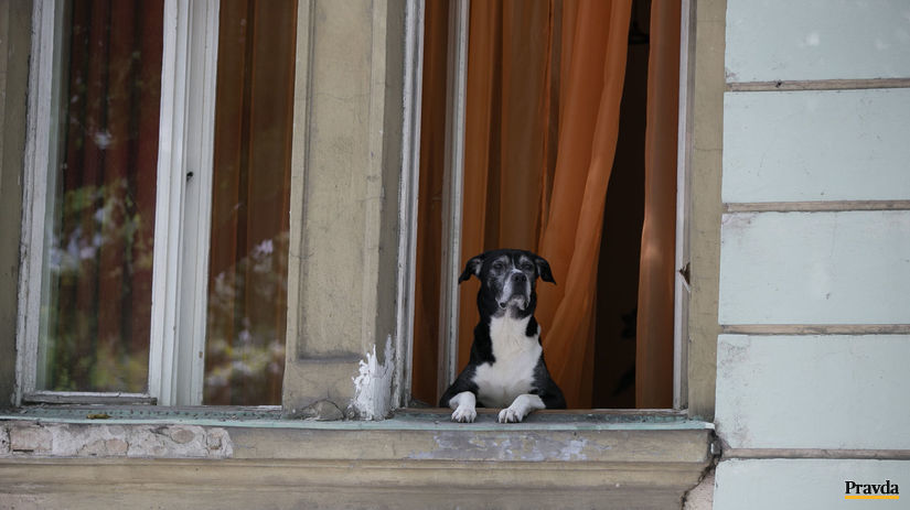pes, okno, počasie