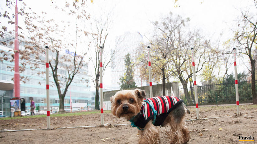 pes, zviera, psí park, venčenie, kabát