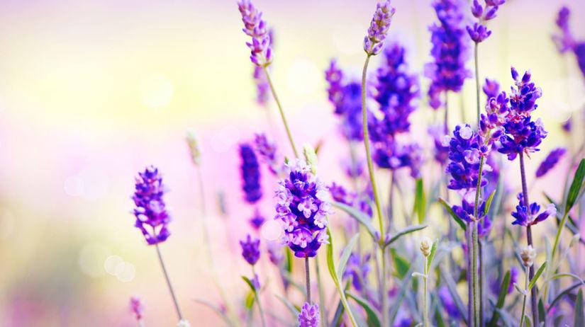 levanduľa, Provensálsko, aromaterapia