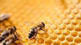 Tomáš Blaškovič, med, včela, včely