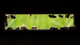 Tomáš Blaškovič, med, včely, včela