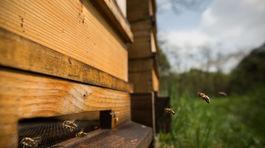 Tomáš Blaškovič, včely, včela