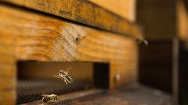 Tomáš Blaškovič, včely, včela, med