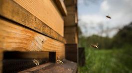 včely, Tomáš Blaškovič