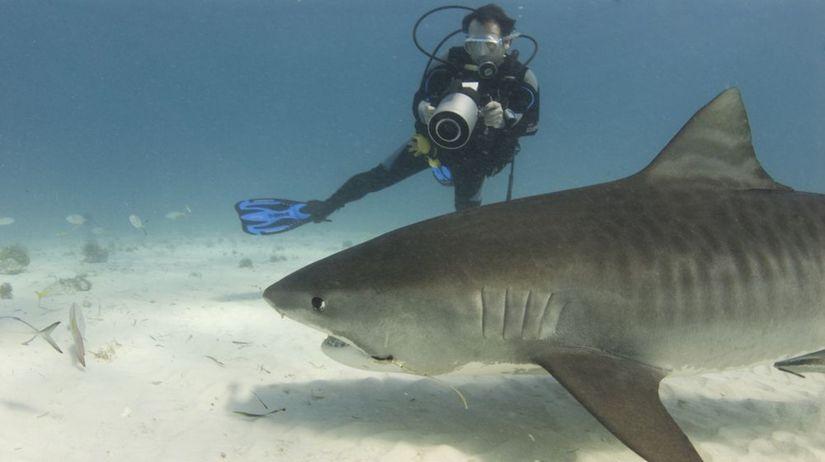 Žralok v chorvatsku