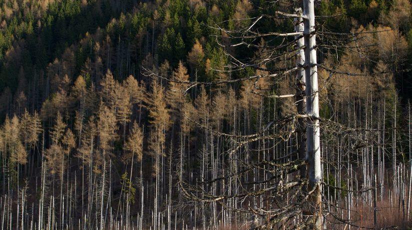 vyschnuté stromy, dolina, Tatry, Tichá dolina,...
