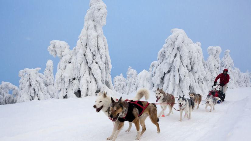 psy, záprahy, Šediváčkov long, Orlické hory,...