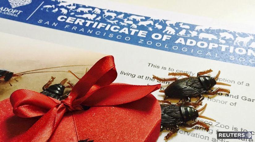 šváb, ZOO, USA, adopcie, certifikát, Valentín,...