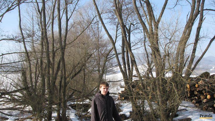 Beluj, výrub stromov, stromy, Ondrej Macko