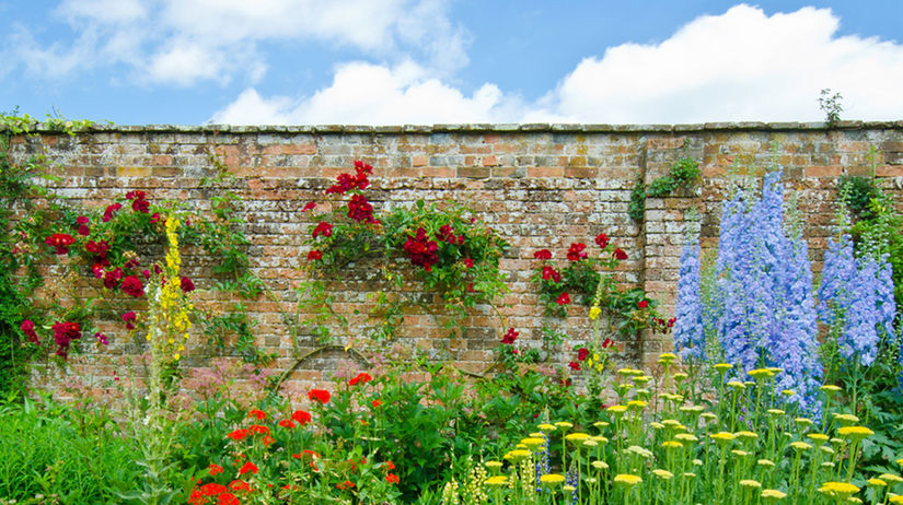 vidiecka záhrada, rastliny