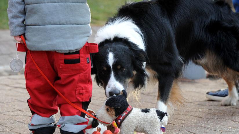 dieťa, pes, hračka