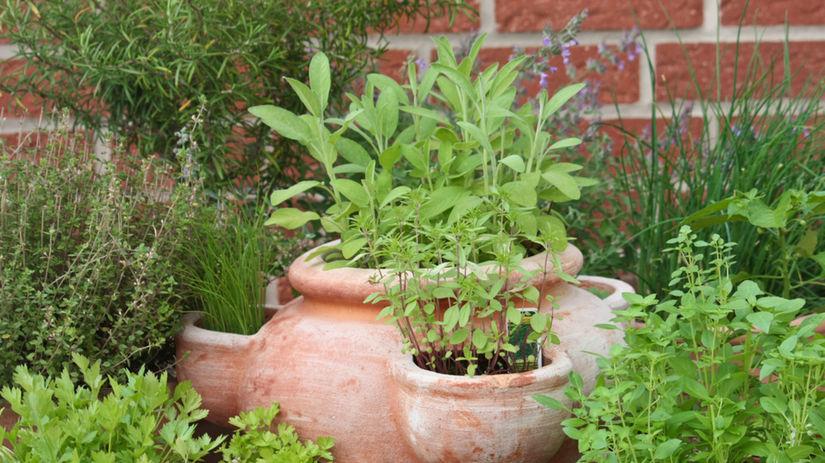 bylinky, koreniny, dochucovanie