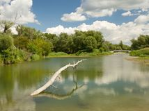 luhy, Dunaj, rieka, voda, les,