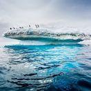 Antarktída, tučniaky, ľadovec, ľad, zima, sneh, more,