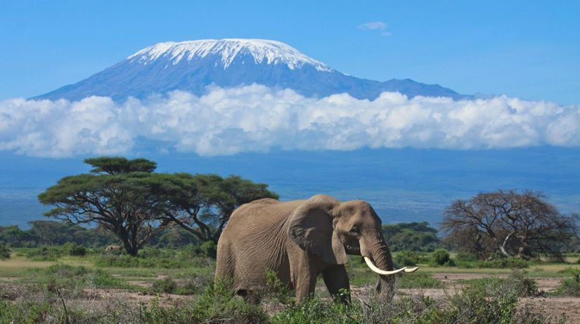 Kilimandžáro, Tanzánia, slon, Afrika