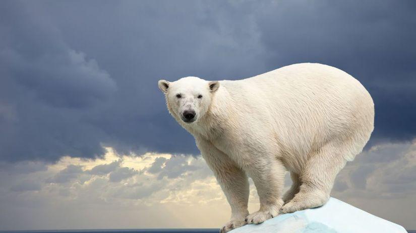 Sevrný pól, ľladový medveď, ľad, kryha, sneh,...