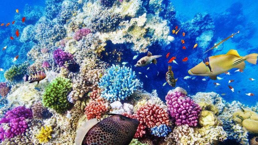 Veľký bariérový útes, Austrália, koraly, ryby,...