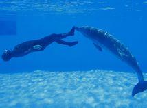 potápač, delfín