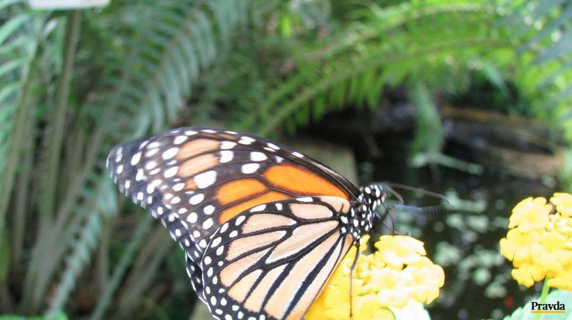 Motýľ, Košice, botanická záhrada