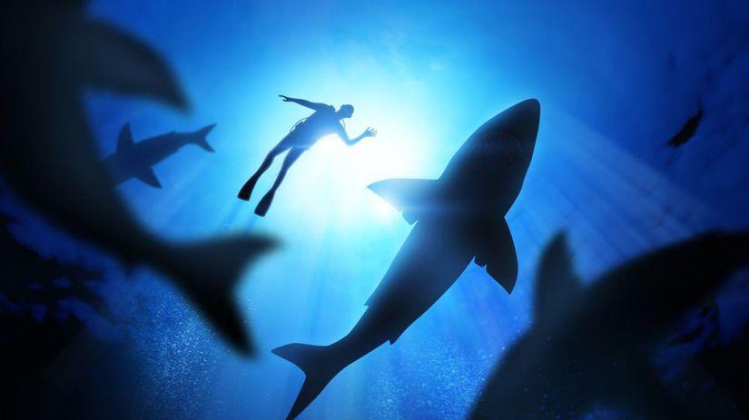 žralok, žraloky, more, potápač, oceán, ryby,...