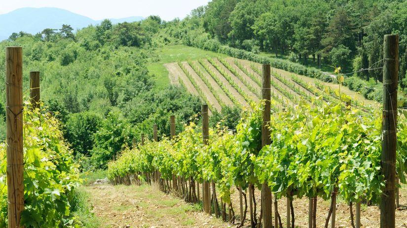 vinica, vinohrad