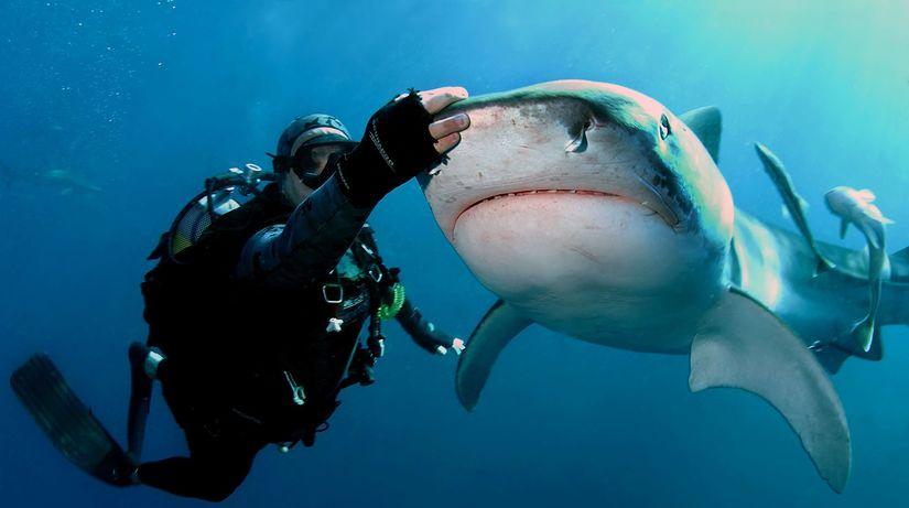 žralokár, Richard Jaroněk, žraloky, more, ryby,...