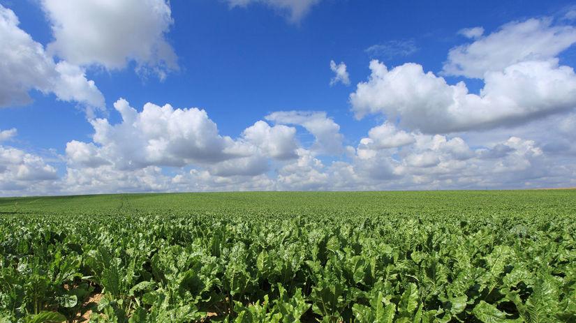 pole, poľnohospodárstvo
