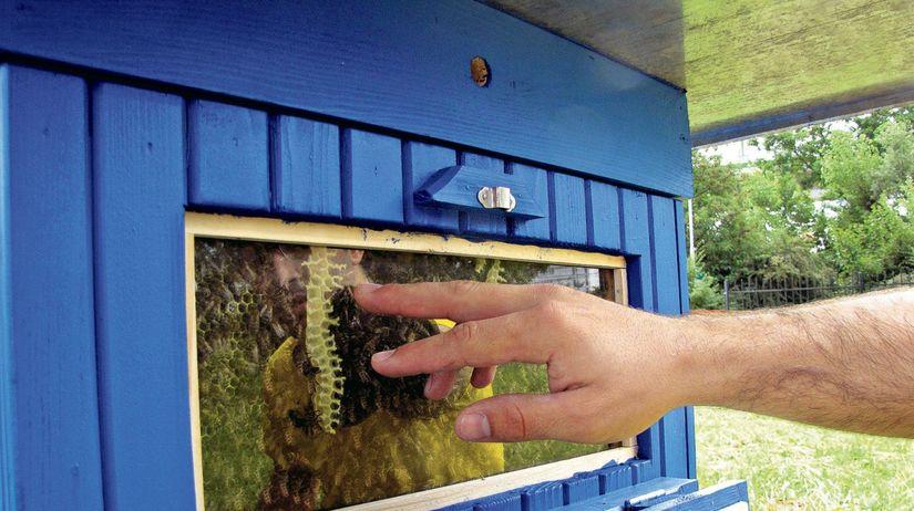považská bystrica, včelí úľ, presklené okno