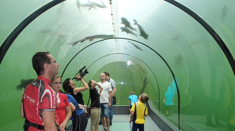 Sklenený tunel, ryby, rybník, Morava, Modrá,...