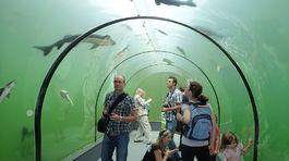 Sklenený tunel, ryby, rybník, Morava, Modrá, podvodný tunel
