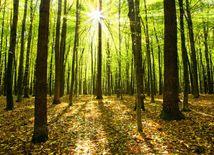 les, stromy, strom,