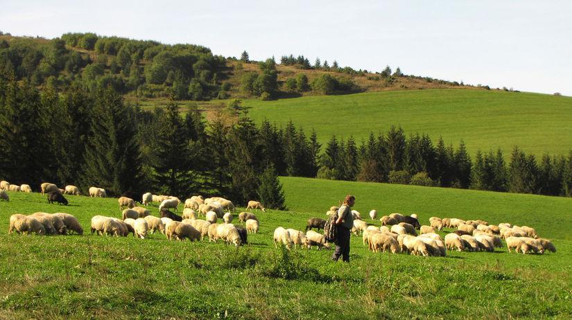 Liptov, bryndza, salaš, ovce