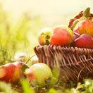 jablko, jablká