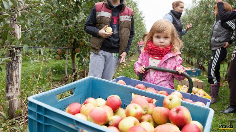 jablko, jablkove hodovanie, dunajska luzna
