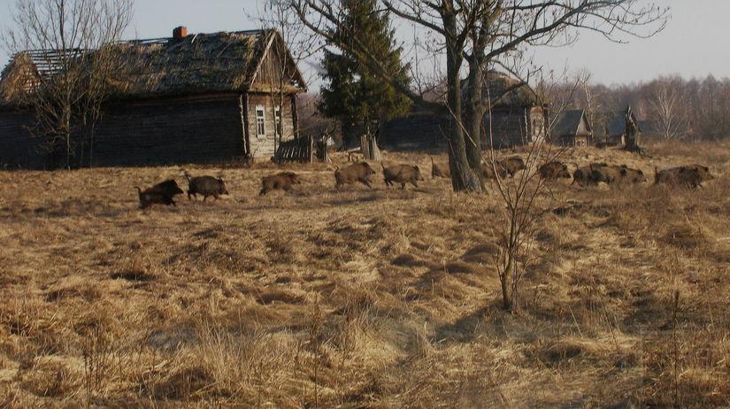 Diviaky, Černobyľ