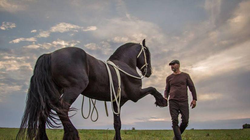 kôň, kone, krotiteľ, furman, čierny kôň