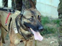 Pes v Rusku zastrelil muža na poľovačke